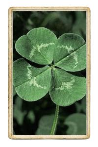 Клевер, кельтский крест