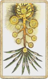 Древо жизни в иудаизме