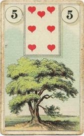 Карта дня: Дерево