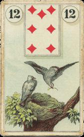 Карта дня: Птицы